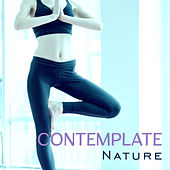 Contemplate Nature – Calm Meditation, Training Yoga, Relaxing Songs to Calm Down, Peaceful Music, Reiki by Reiki