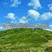77 Natural Study Tracks by Classical Study Music (1)