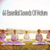 66 Essential Sounds Of Nature de Meditación Música Ambiente
