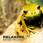 Relaxing Nature Melodies – Calm Music to Rest, Healing Therapy, Nature Waves of Calmness, Mind Peace de Nature Sound Collection