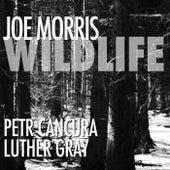 Wildlife by Joe Morris