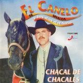 Chacal de Chacales de El Canelo De Sinaloa