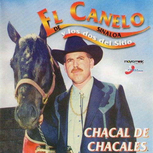 Chacal de Chacales by El Canelo De Sinaloa