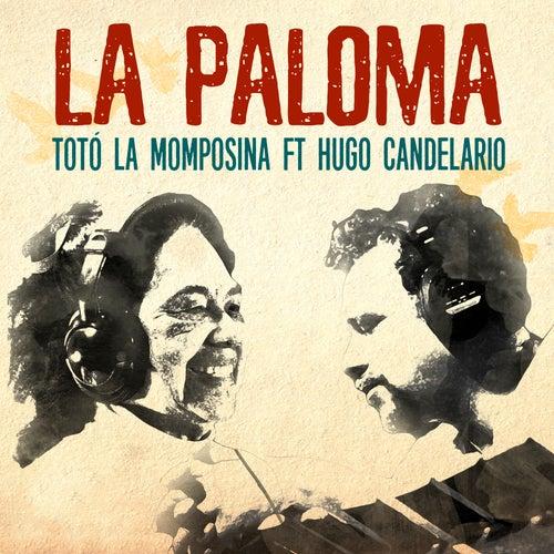 La Paloma de Toto La Momposina