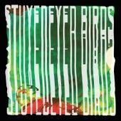 Stuyedeyed / Birds Split 7