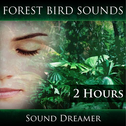 Forest Bird Sounds (2 Hours) by Sound Dreamer