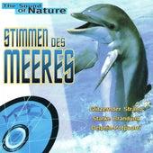 Stimmen des Meeres by Wale