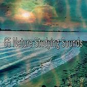 65 Nature Studying Sounds by Classical Study Music (1)
