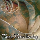 77 Sounds Of Natural Recordings by Lullaby Land