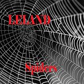 Spiders by Leland