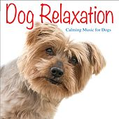 Dog Relaxation: Calming Music for Dogs by Jay Oliver