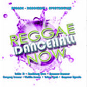 Reggae Damcehall Now by Various Artists