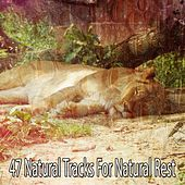 47 Natural Tracks For Natural Rest de White Noise Babies