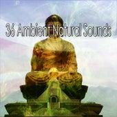 36 Ambient Natural Sounds de Meditación Música Ambiente