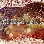 42 Lullabyes From Nature by Baby Sleep Sleep