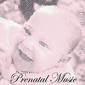 Prenatal music by Various Artists