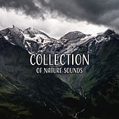 Collection of Nature Sounds by Nature Sounds (1)