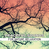 Peaceful Sounds for Nature Relaxation by Echoes of Nature