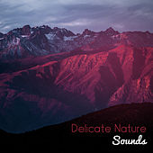 Delicate Nature Sounds by Nature Sounds (1)