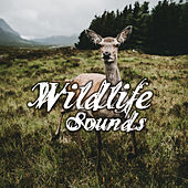 Wildlife Sounds – Nature Sounds, Music for Relax, Relief Stress, Reduce Anxiety, Calm of Mind, Bliss by Nature Sounds (1)