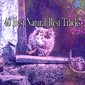 40 Best Natural Rest Tracks de White Noise Babies