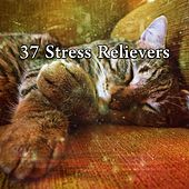 37 Stress Relievers by S.P.A