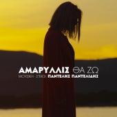 Amaryllis: