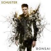 Bonsai de Schuster