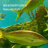 Natural High by Weathertunes