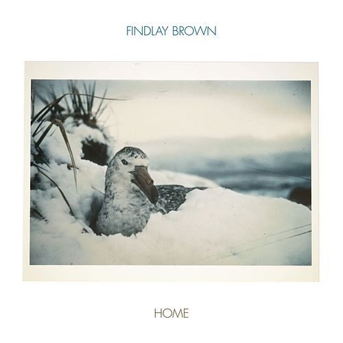 Home by Findlay Brown
