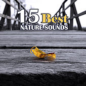 15 Best Nature Sounds by Calming Sounds