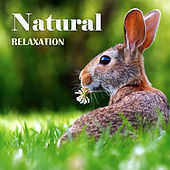 Natural Relaxation de Nature Sounds Artists