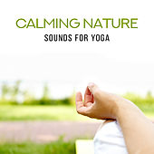 Calming Nature Sounds for Yoga von Lullabies for Deep Meditation