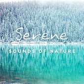 Serene Sounds of Nature de Ambient Music Therapy