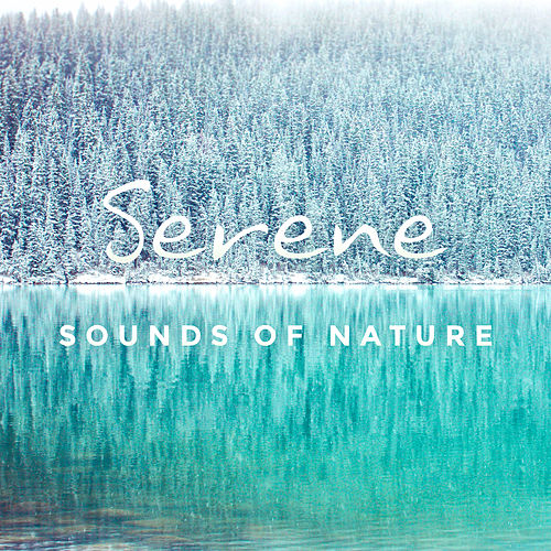 Serene Sounds of Nature by Ambient Music Therapy