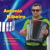 Acordeão Midi, Tradicional e Concertina de António Ribeiro