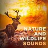 Nature and Wildlife Sounds de Various Artists