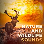 Nature and Wildlife Sounds by Various Artists