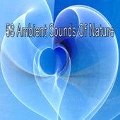 58 Ambient Sounds Of Nature de Meditación Música Ambiente