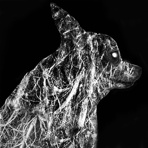 Root Canine by Beast
