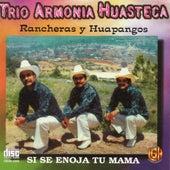 Rancheras y Huapangos by Trio Armonia Huasteca