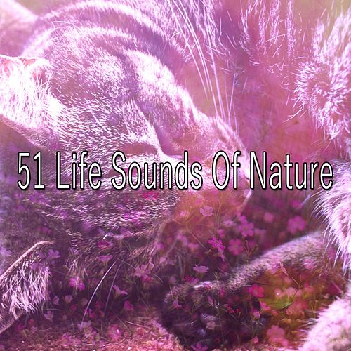 51 Life Sounds Of Nature by Sounds Of Nature
