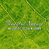 Peaceful Nature Melodies to Calm Down de Nature Sound Collection