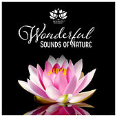 Wonderful Sounds of Nature - Deep Relaxation, Meditation, Sleep, Spa & Zen Garden de Meditación Música Ambiente