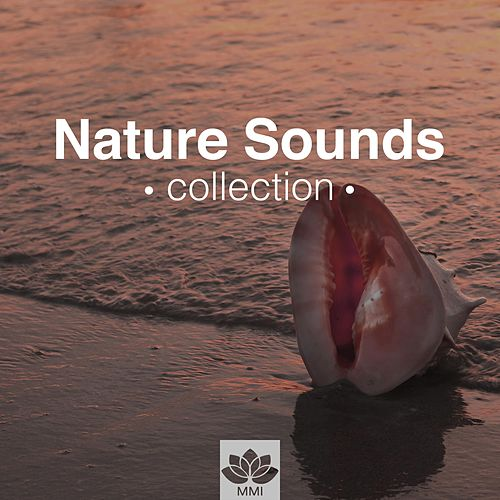 Nature Sounds Collection - Relaxation & Meditation Music for Sleep, Relax, Study, Find Peace by Relaxing Mindfulness Meditation Relaxation Maestro