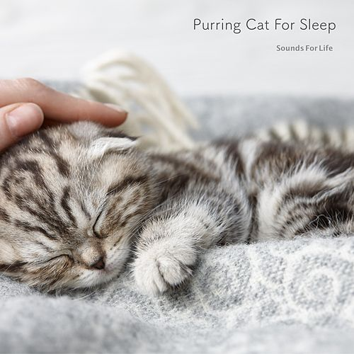 Purring Cat for Sleep by Sounds for Life