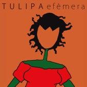 Efêmera de Tulipa Ruiz