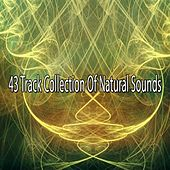 43 Track Collection Of Natural Sounds by Ocean Sounds Collection (1)