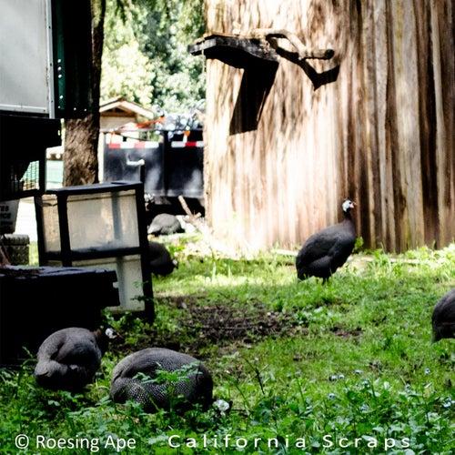 California Scraps by Roesing Ape