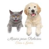 Música para Relaxar Cães e Gatos (Animais de Estimação Tranquilos, Cães Adormecidos, Terapia para Ansiedade de Cachorro e Hiperatividade de Gato) de Academia de Música para Animais